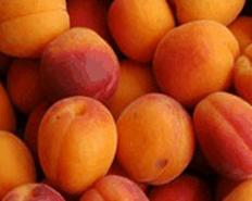 Variété : abricot Merveille du Dauphiné