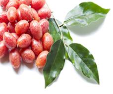 Variété : fruits rouges divers
